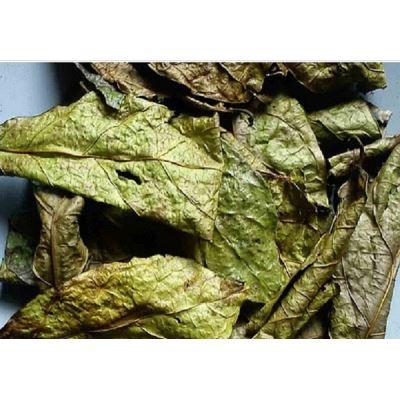 10 tác dụng của trà lá xạ đen – thần dược đối với sức khỏe